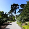 San-francisco-botanical-garden