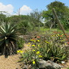 Fairchild-tropical-botanic-garden