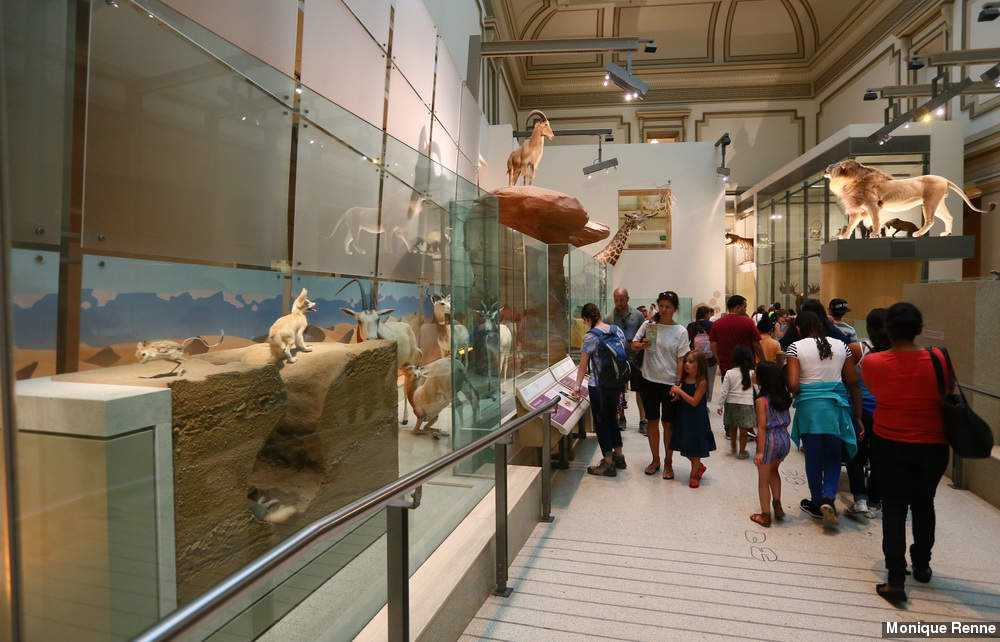 exploring the natural history museum Dinosaurs, butterflies and spiders the natural history museum has so many cool things to see and interact with that families will want to plan multiple visits extreme mammals: odd features unusual creatures is the current special exhibit and will be at the natural history museum until september.