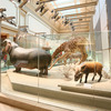 National-museum-of-natural-history