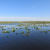 Everglades-national-park