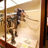 Harvard-museum-of-natural-history