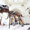 The-field-museum
