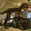 American-museum-of-natural-history