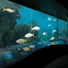 New-york-aquarium