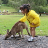 Currumbin-wildlife-sanctuary
