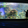 Ripley-s-aquarium-of-canada